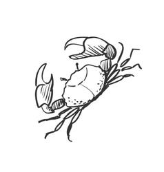 Doodle crab vector