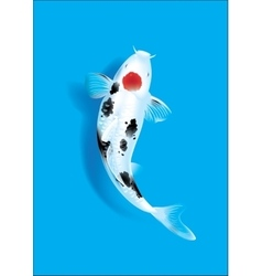 Koi carp on blue vector image
