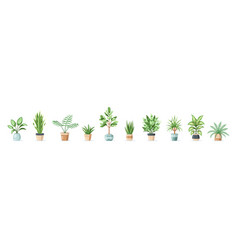 set flowers in pots isolated on white vector image