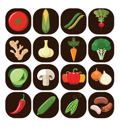 set of different kinds of vegetables vector image