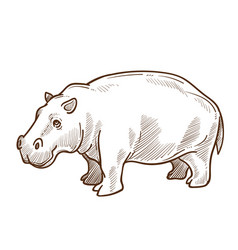 african hippo or hippopotamus isolated sketch vector image