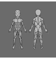 Anatomy of children muscular system exercise vector