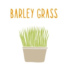 Barley grass vector