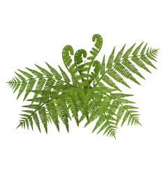 Bush of green wide open leaves of fern vector