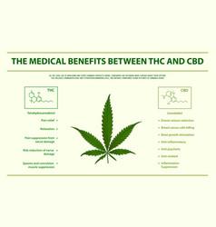 Medical benefits between thc and cbd vector