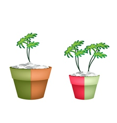 Two Evergreen Plant in Ceramic Pots vector