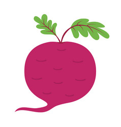 beet with leaves icon red beetroot vegetable vector image