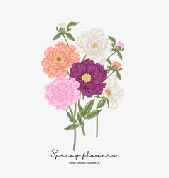 colorful peonies bouquet spring flowers vector image