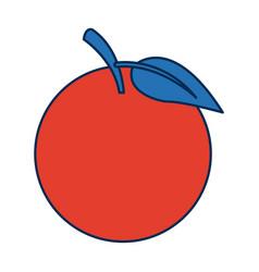 Fruit orange fresh nutrition citrus vitamins vector