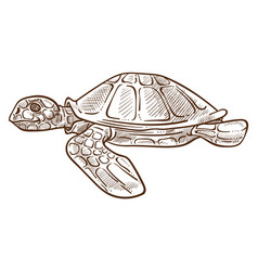 turtle or tortoise isolated sketch underwater vector image
