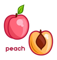 Stylized of fresh peach on white vector image vector image