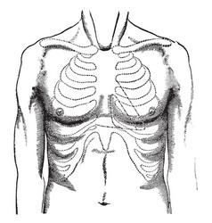 Breast surface vintage vector