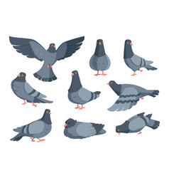 Cartoon dove funny pigeon characters flying vector