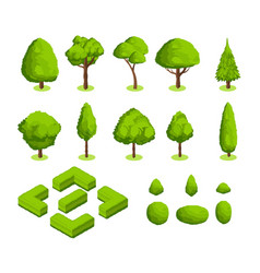 Isometric 3d park and garden trees and vector