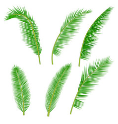 tropical palm leaves collection vector image