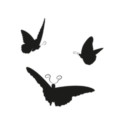Image of flying butterflies on a white background vector image vector image