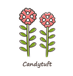 Candytuft red color icon aster garden flower vector
