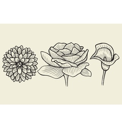 Flowers - hand drawn collection vector