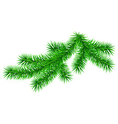 green fluffy fir pine twig isolated on white vector image