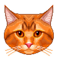 Pixel red cat portrait detailed isolated vector