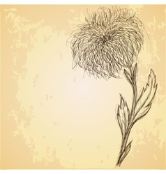 Sketch of chrysanthemum flower on grungy texture vector image