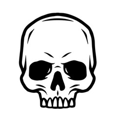 skull without jaw vintage concept vector image