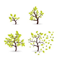 Botany concept cyclic growth tree vector
