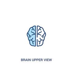 Brain upper view concept 2 colored icon simple vector