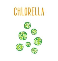 Chlorella vector image vector image