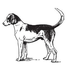 Foxhound vintage vector