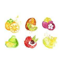 Juicy ripe tropical fruit collection persimmon vector