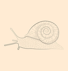 grape snail vector image