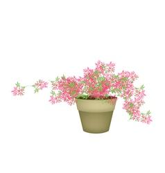 A Pink Flowering Plants in Flower Pot vector image vector image