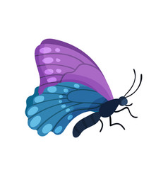 beautiful flying blue and purple butterfly insect vector image