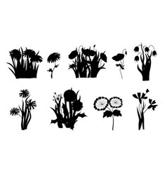 flowers silhouettes set wild forest and garden vector image