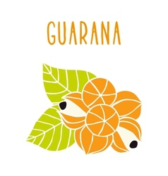 Guarana vector image