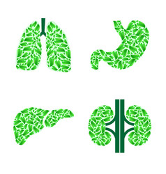 human organs with leaves vector image