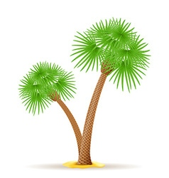 palm tree 23 vector image vector image