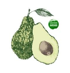 Hand drawn avocado vector image