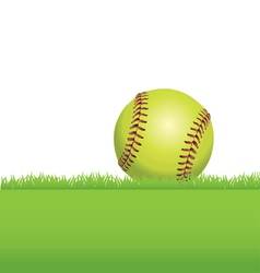 Softball in the Grass vector image vector image
