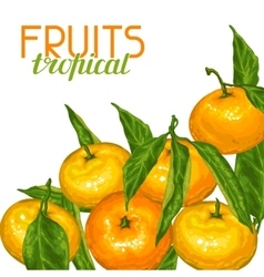 Background with mandarins Tropical fruits and vector