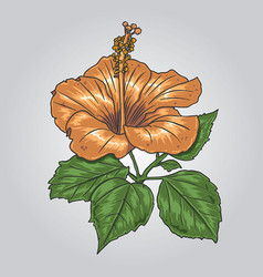 orange flower vector image