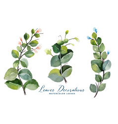 Watercolor green leaves bouquet collection vector