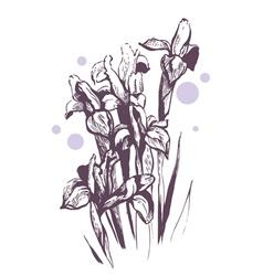 iris flowers hand-drawn vector image vector image