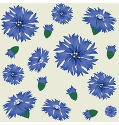 seamless pattern with blue cornflower vector image