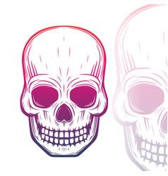 Skull on white vector