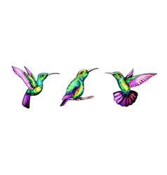 small hummingbird set exotic tropical colibri vector image