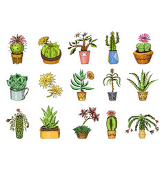 Succulents set cactus peyote echeveria vector