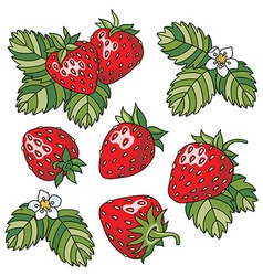 Strawberry vector image