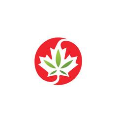 Canadian cannabis logo icon for hemp leaf vector